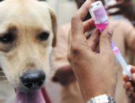 11 Warga Jatiluwih Digigit Anjing Rabies