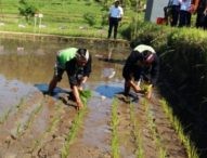Antisipasi Gagal Tanam dan Panen, Petani Jembrana  Sekolah Lapangan Iklim