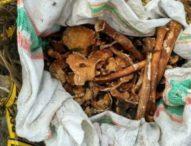 Abrasi Meluas, Tulang Belulang  Para Korban PKI 'Nongol' Lagi