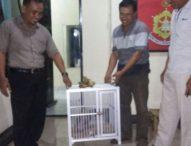 Lagi, Polisi Gagalkan Penyelundupan Burung yang Dilindungi