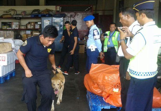 Sweeping Narkoba di Bandara Kerahkan Anjing Pelacak
