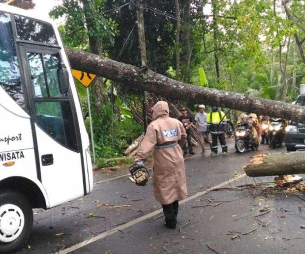 Bus Pariwisata Tertimpa Pohon, 15 Turis Asing Selamat