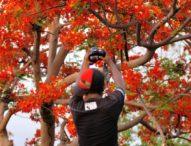 Indahnya Bunga Sepe Jadi Bidikan Fotografer Sambut Pagi di Bulan Desember