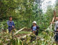 Diterjang Puting Beliung, Ratusan Pohon Cengkeh Tumbang