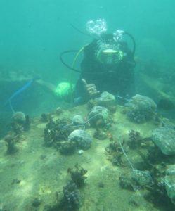 Penyelundupan Coral