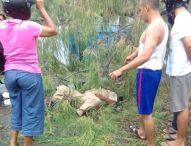 Badai Amuk Larantuka, Cemara Tumbang Tewaskan Pelatih Perseftim