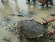 Ini Modus Penyelundup Penyu Dagangkan Penyu Ilegal di Bali