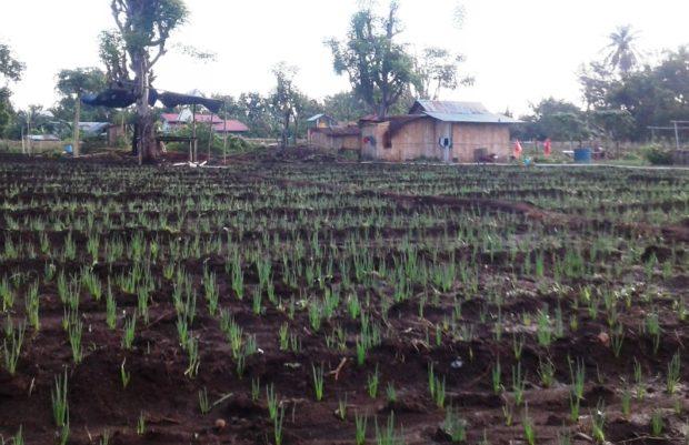Pagi Ramah Petani Bawang di Tengah Kota