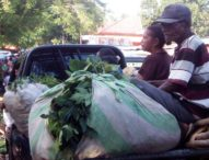 Duka Petani Tanjung Bunga, Senyum itu Terkembangdi Pasar