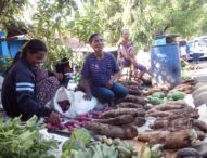 Ubi Kayu Tanjung Bunga Laris di Pasar Larantuka