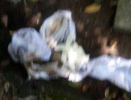 Polisi Bongkar Kuburan Misterius