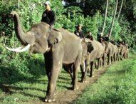 Kasih Makan Gajah, Bos Bakas Levi Rafting Malah Tewas Diseruduk