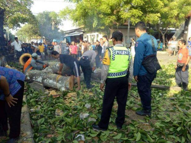 Geger, Pohon Kaliombo Mendadak Tumbang di Pasar Intaran