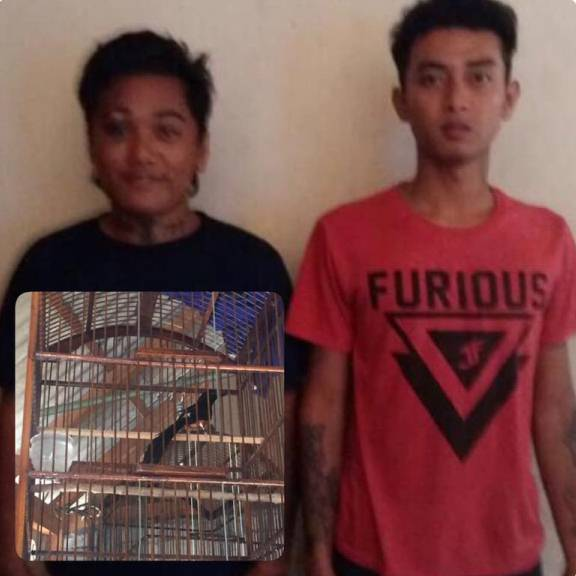 Curi Puluhan Burung, Dua Remaja Diamankan Polisi