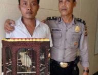 Pemuda Ditangkap, Jual Burung Kakak Tua Langka Senilai Rp 3 Juta
