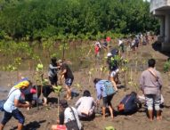 """""""Gema Satu Kata"""", BKIPM Ajak Mahasiswa Tanam Ratusan Pohon Mangrove"""