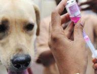 Puluhan Anjing Divaksin Anti Rabies