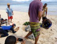 Terjaring Pukat Nelayan Solor, Hiu Paus dan Penyu Dilepaskan