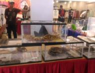 Reptile Langka Seharga Ratusan Juta Dipamerkan di Kuta
