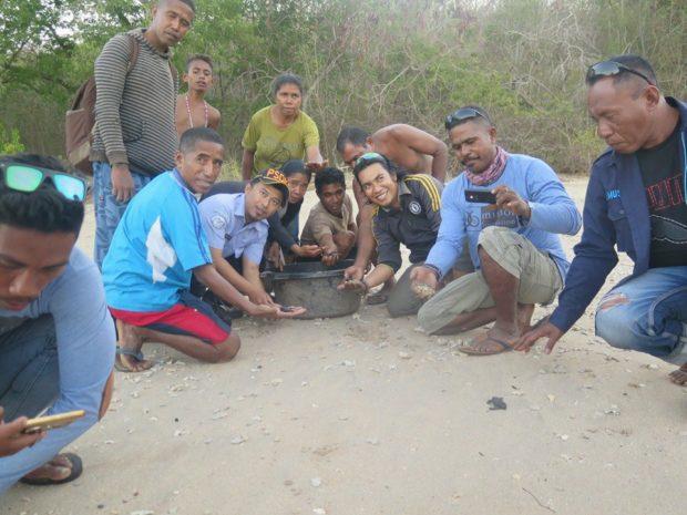 Sarang Telur Penyu Nelayan Pantai Oa Tetaskan Tukik Tempayan