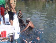 Seekor Hiu Paus 8 Meter Dibebaskan Nelayan Desa Nobo