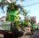 DLH Flotim Ajak Tanam Pohon, Dinkes Gaungkan Bahaya Campak dan Rubella