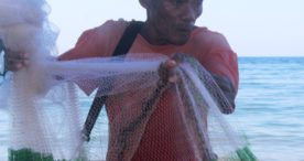 Ikan Bermain Sampai di Pinggir Pantai, Warga Desa Sulengwaseng Beri Apresiasi Kepada Pemda Flotim
