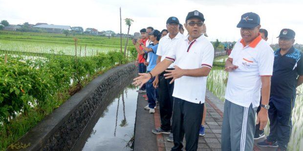 Jaya Negara Tinjau Penataan Subak Lestari Intaran Desa Sanur Kauh