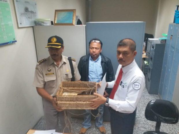 Petugas Gabungan Gagalkan Penyelundupan Kalajengking
