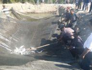 Bupati Anton Hadjon Panen Perdana Ikan Bandeng di Sinamalaka
