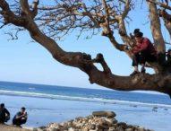 Di Solor Timur Ada 7 Desa Tak Bersinyal, Warga Terpaksa Panjat Pohon