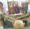 Festival Nusa Tadon Adonara,Karang Taruna Kiwang Ona Siapkan HIdangan Bloma
