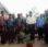 Lanjutan Perdamaian Desa Wailolong-Bantala, Beringin Tanaman Perdamaian