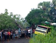 Sudah Seminggu Tutup Jalan di Otan, Pohon Tumbang Itu Belum Terevakuasi